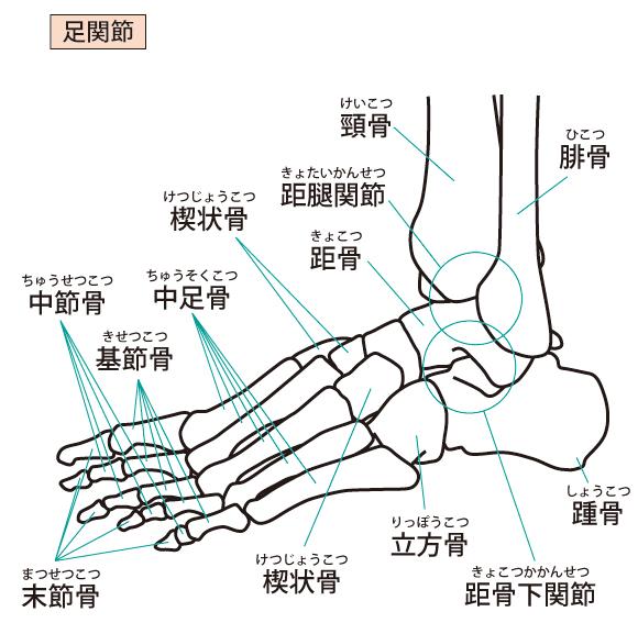 足関節捻挫 足根骨