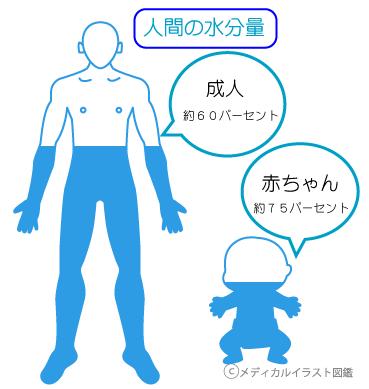 人間の水分量 成人 赤ちゃん